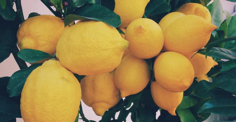 Zitronen enthalten große Mengen an Vitamin C, welches unser Imunsystem fördert.